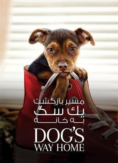دانلود فیلم مسیر بازگشت یک سگ به خانه 2019 دوبله فارسی