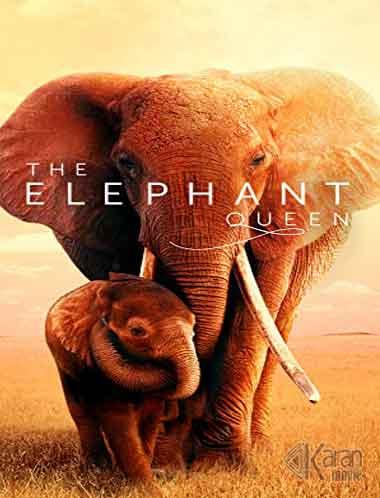 دانلود مستند The Elephant Queen 2019